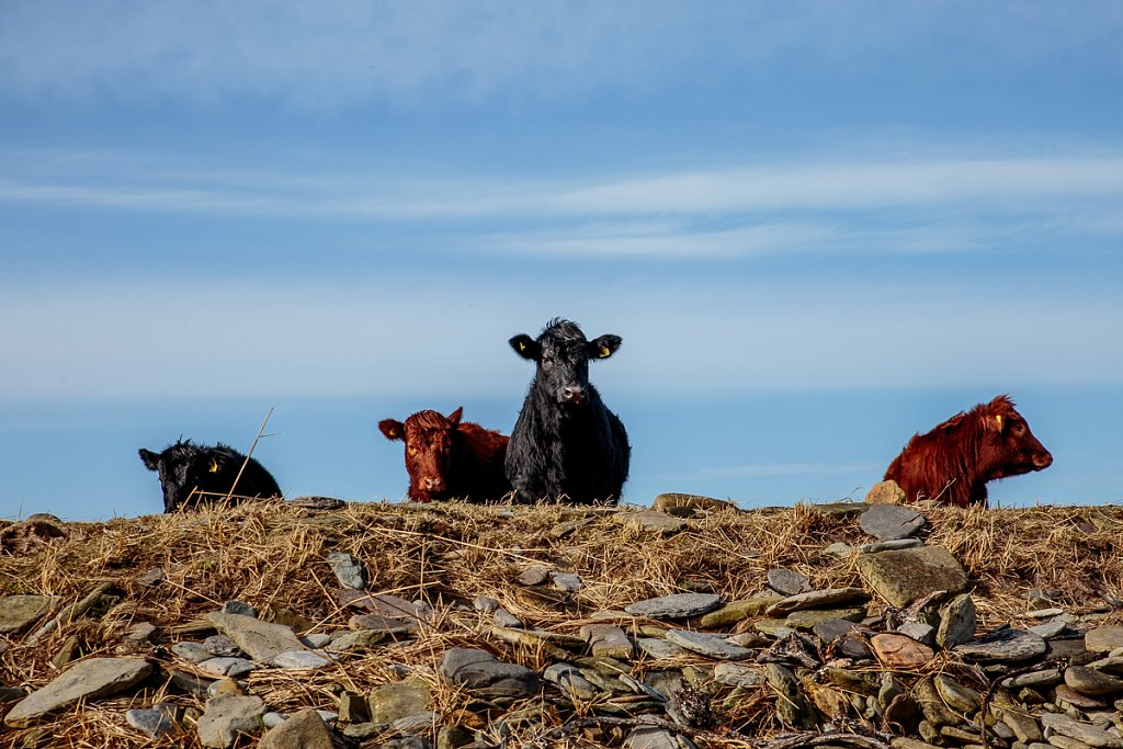 The odd coos